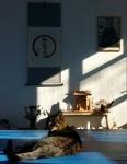 Stünggu: die Dojo-Katze